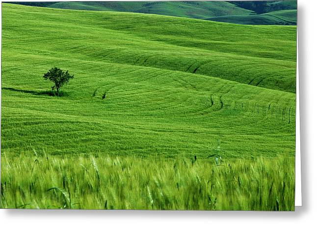 Wheat Field And Tuscan Countryside Greeting Card by Brian Jannsen