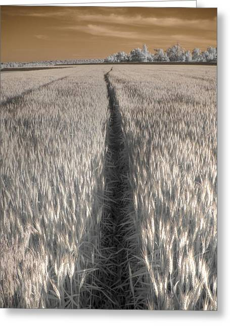 Wheat Field Greeting Card by Jane Linders