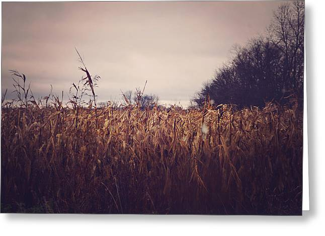 Michigan Farmhouse Greeting Cards - Wheat Field Rustic Autumn Home Decor Greeting Card by Elle Moss
