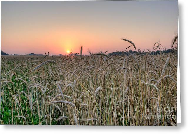Wheat Field Sunrise Greeting Card by Michael Ver Sprill