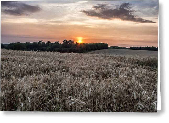 Golden Summer Grass Greeting Cards - Wheat Field Sunset in France Greeting Card by Nomad Art And  Design