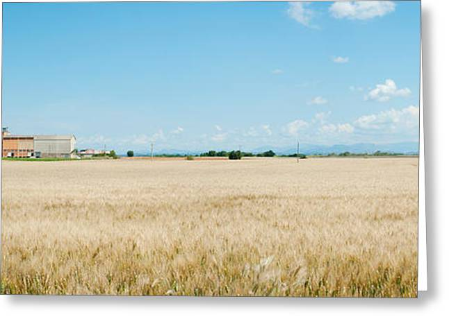 Grain Elevator Greeting Cards - Wheat Field With Grain Elevator Greeting Card by Panoramic Images