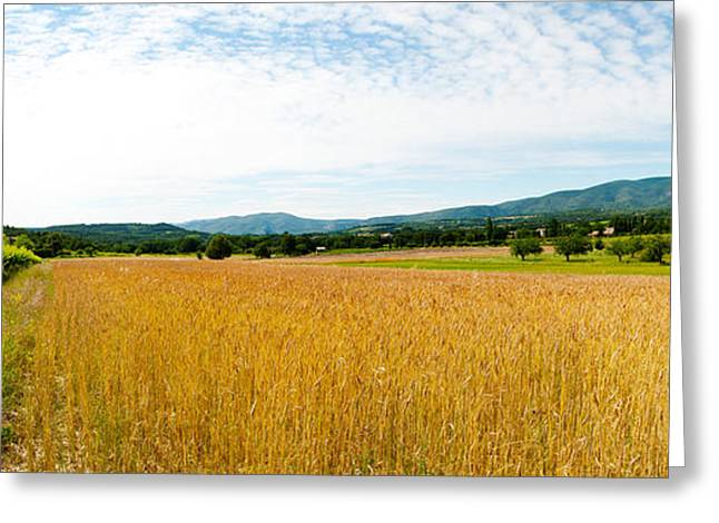 Vineyard Landscape Greeting Cards - Wheat Field With Vineyard Along D135 Greeting Card by Panoramic Images