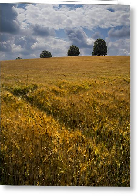 Kansas Landscape Art Greeting Cards - Wheat Fields Greeting Card by Debra and Dave Vanderlaan