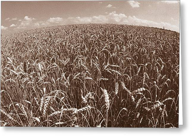 Field. Cloud Greeting Cards - Wheat Fields Forever Greeting Card by Steven Huszar