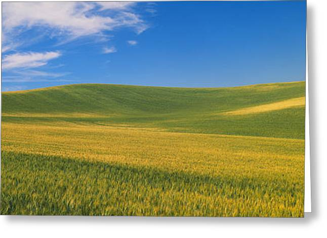 Plantlife Greeting Cards - Wheat Fields, S.e. Washington Greeting Card by Panoramic Images