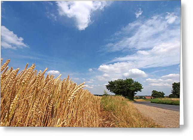 Harvest Time Photographs Greeting Cards - Waiting For Harvest Greeting Card by Gill Billington