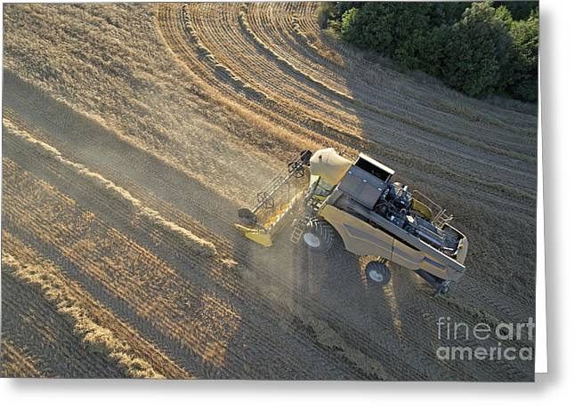 Wheat harvest in Provence Greeting Card by Sami Sarkis