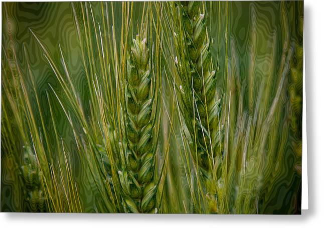 Cereal Digital Art Greeting Cards - Wheat in the Palouse II Greeting Card by David Patterson