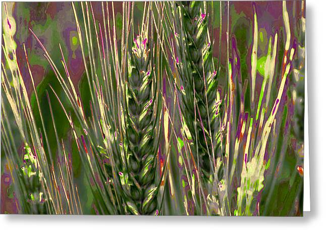 Cereal Digital Art Greeting Cards - Wheat in the Palouse III Greeting Card by David Patterson