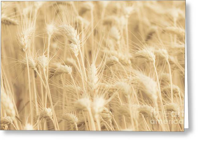 Ready For Harvest Greeting Cards - Wheat Softness Greeting Card by Imagery by Charly