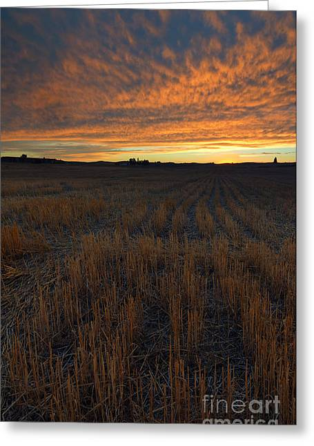 Wheat Greeting Cards - Wheat Stubble Sunset Greeting Card by Mike  Dawson