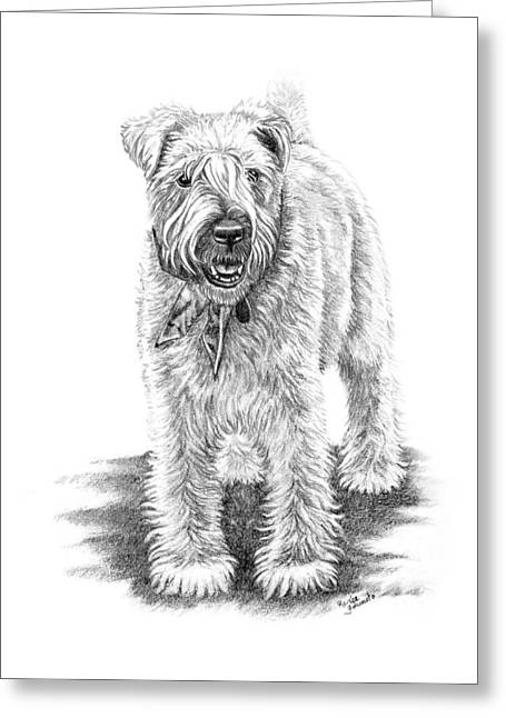 Graphite Art Drawings Greeting Cards - Wheaten Charm Greeting Card by Renee Forth-Fukumoto