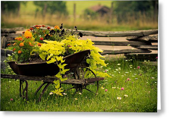 Wheels Photographs Greeting Cards - Wheel Barrow Of Flowers Greeting Card by Shane Holsclaw