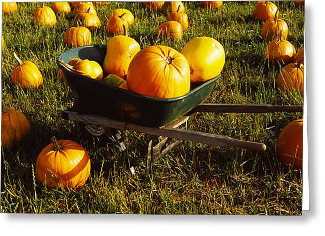 Wheelbarrow In Pumpkin Patch, Half Moon Greeting Card by Panoramic Images