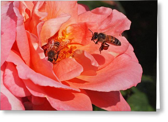 Bees Greeting Cards - Wheels Down Greeting Card by Rona Black