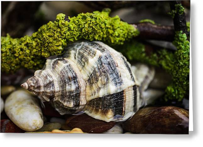 Shell Texture Greeting Cards - Whelk I Greeting Card by Marco Oliveira