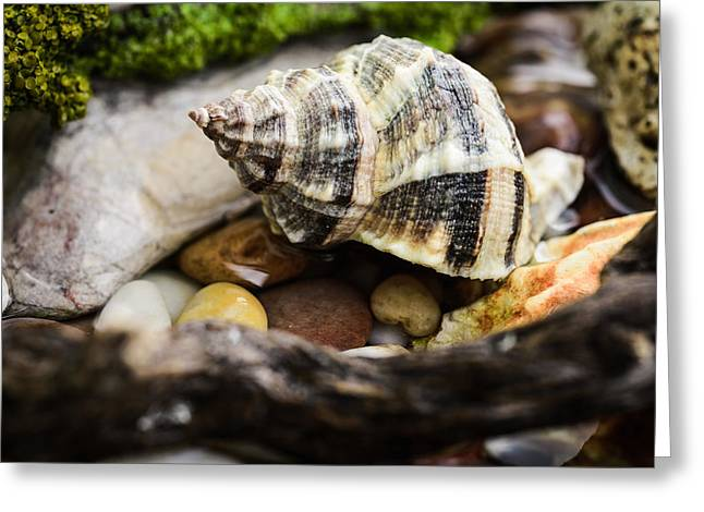 Shell Texture Greeting Cards - Whelk II Greeting Card by Marco Oliveira