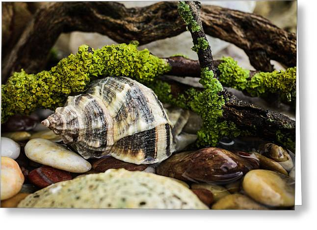 Moist Greeting Cards - Whelk IV Greeting Card by Marco Oliveira