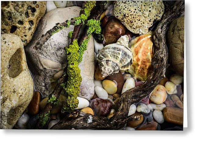 Moist Greeting Cards - Whelk VI Greeting Card by Marco Oliveira