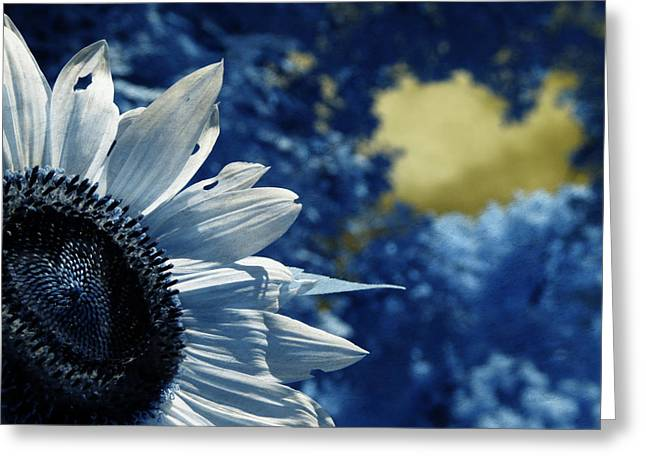 Daydream Greeting Cards - When a Sunflower Sleeps Greeting Card by Luke Moore