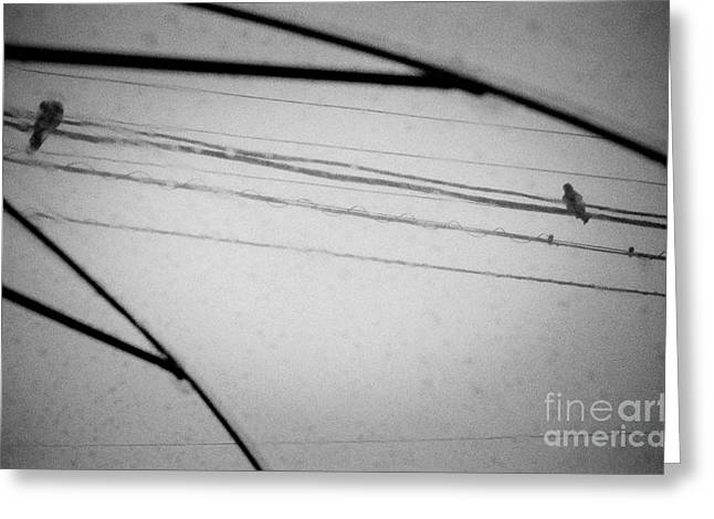 Powerline Greeting Cards - When Even Birds Sing the Blues Greeting Card by Dean Harte