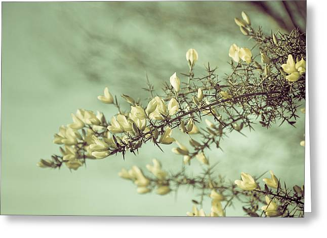 Plant Singing Greeting Cards - When gorse flowers sing their melody Greeting Card by Loriental Photography