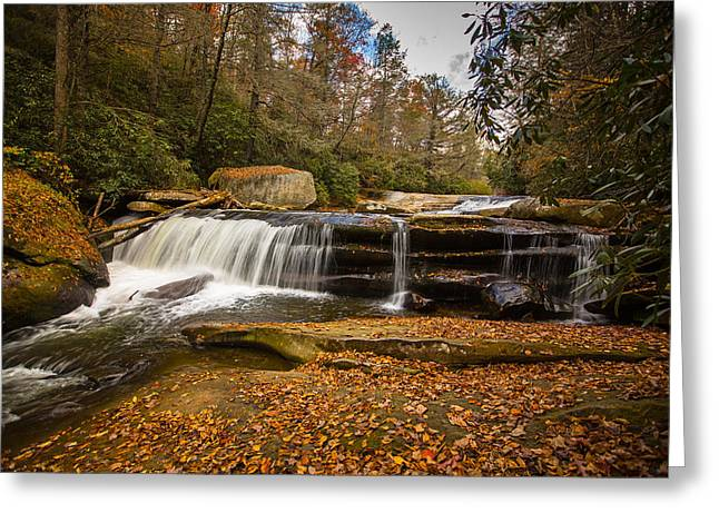 Pisgah National Forest Greeting Cards - When Leaves Have Fallen Greeting Card by John Haldane
