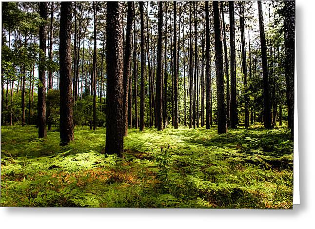 WHEN the FOREST BECKONS Greeting Card by KAREN WILES