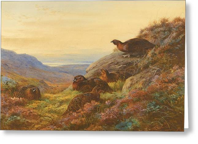 Gloaming Paintings Greeting Cards - When The Gloaming Comes - Red Grouse Greeting Card by Celestial Images