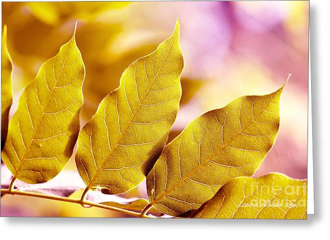 Laura Wrede Greeting Cards - When the Leaves Turn Gold Greeting Card by Artist and Photographer Laura Wrede