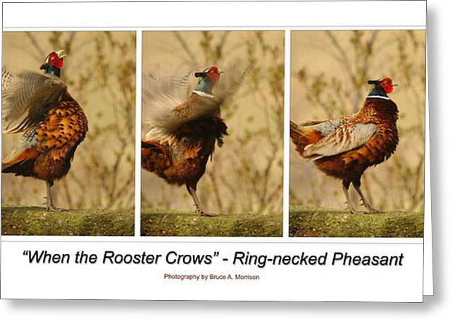 Pheasant Greeting Cards - When the Rooster Crows Greeting Card by Bruce Morrison