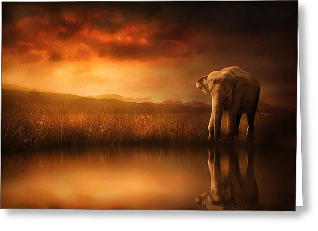 Elephants Digital Art Greeting Cards - When the Sun Goes Down Greeting Card by Jennifer Woodward