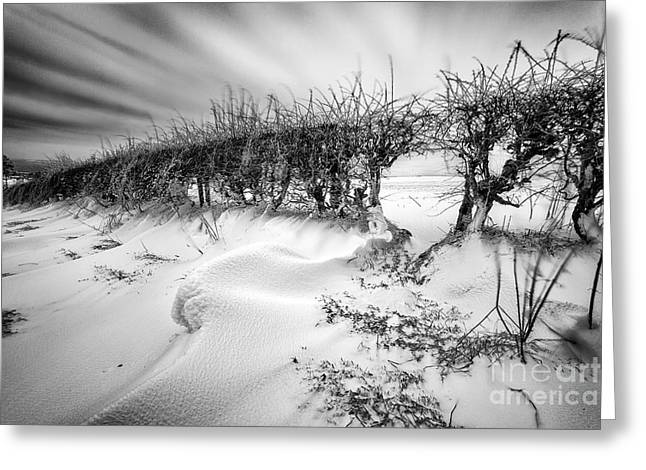 Snow Drifts Greeting Cards - When the wind blows Greeting Card by John Farnan
