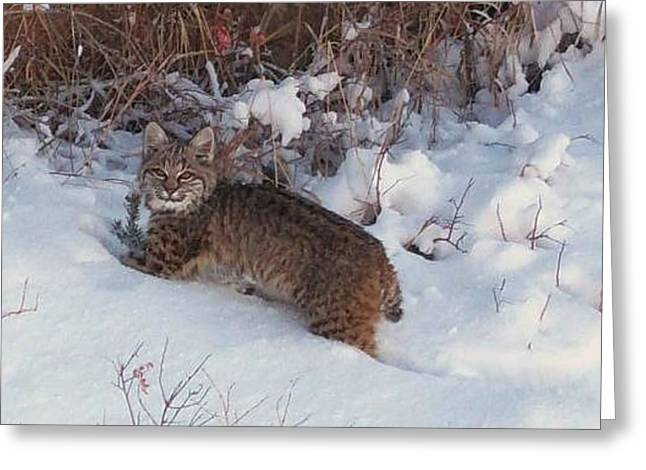 Bobcat Mixed Media Greeting Cards - Whens Dinner Greeting Card by For The Love Of Art