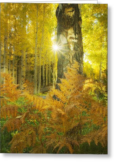 Coconino National Forest Greeting Cards - Where Colors Play Greeting Card by Peter Coskun