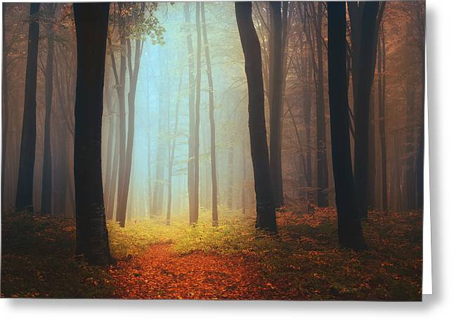 Foggy Day Greeting Cards - Where fairies live Greeting Card by Toma Bonciu