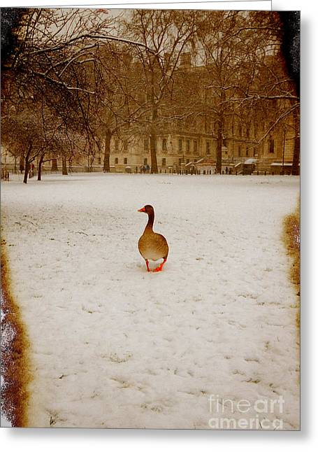 Winter Scene Photographs Greeting Cards - Where is everyone Greeting Card by Jasna Buncic