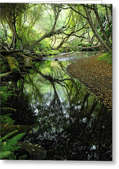 Forest Creek Greeting Cards - Where Magic Happens Greeting Card by Donna Blackhall