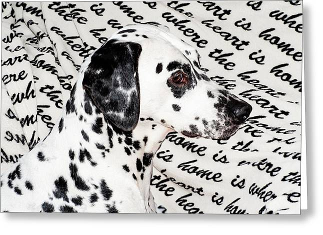 Gun Dog Greeting Cards - Where the Heart is Home Where the Heart Is. Kokkie. Dalmation Dog Greeting Card by Jenny Rainbow