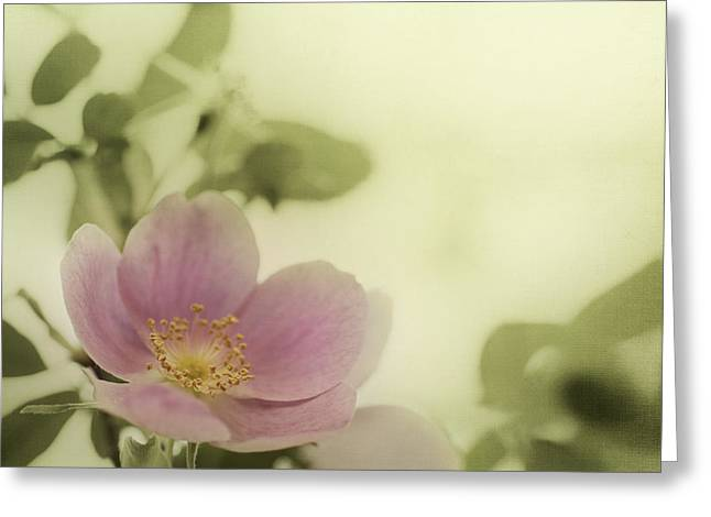 Medicinal Greeting Cards - Where The Wild Roses Grow Greeting Card by Priska Wettstein