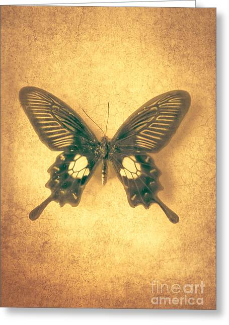 Lepidoptera Greeting Cards - Where the Wind Blows Greeting Card by Jan Bickerton