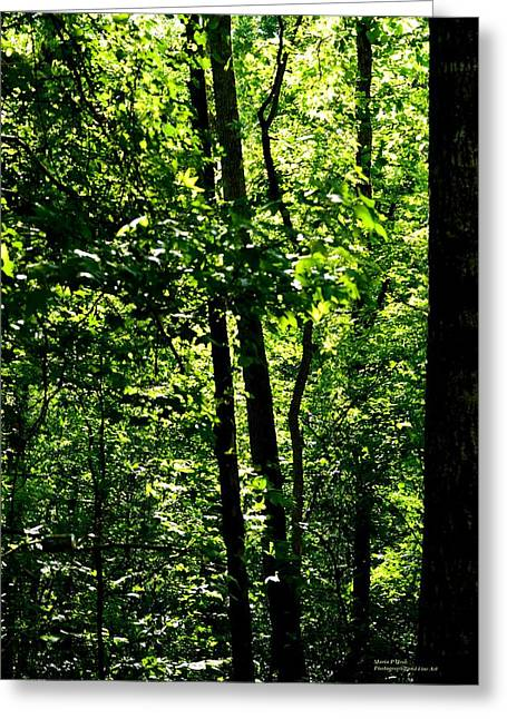 Dwell Greeting Cards - Where Trees Dwell Greeting Card by Maria Urso