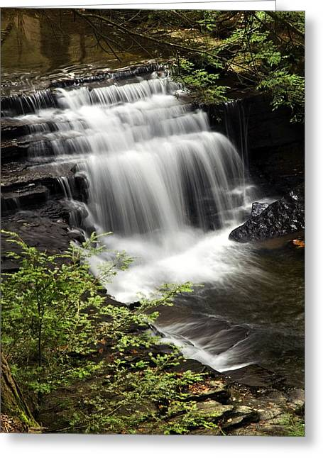 Green Foliage Greeting Cards - Where Waters Meet Greeting Card by Christina Rollo