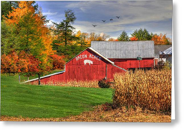 Barn Digital Greeting Cards - Wheres the Bacon Greeting Card by Sharon Batdorf