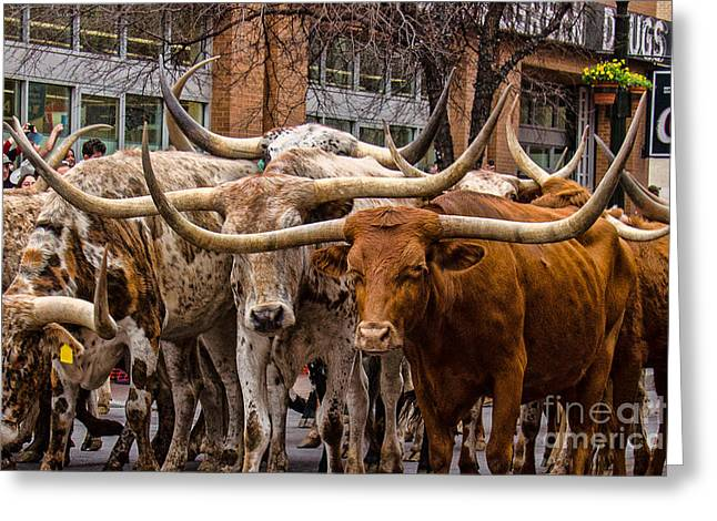 Texas Cowgirl Greeting Cards - Wheres the Beef Greeting Card by John Kain