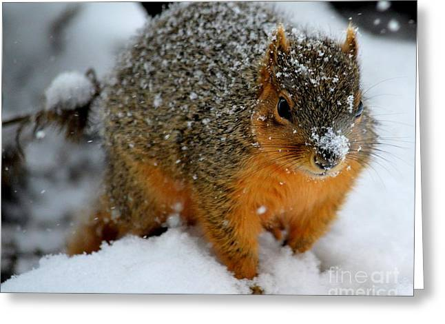 Fox Squirrel Greeting Cards - Wheres the Nuts Greeting Card by Charles Trinkle
