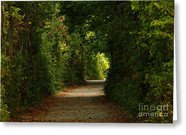 Shelley Myke Greeting Cards - Wherever the Path Leads Greeting Card by Inspired Nature Photography By Shelley Myke