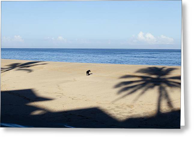 Dog Beach Print Greeting Cards - Which Tree Greeting Card by Sean Davey