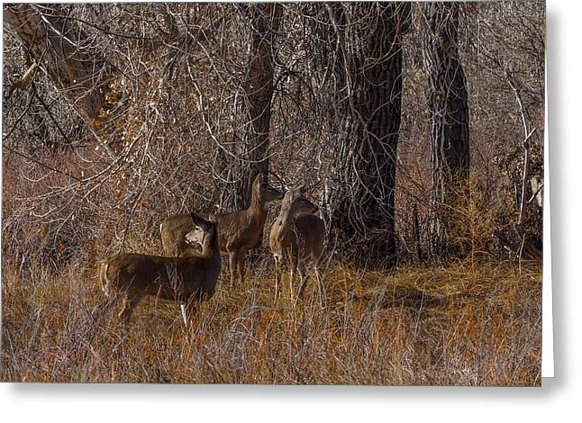 Nature Center Greeting Cards - Which Way Greeting Card by Ernie Echols